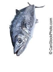 Fresh king mackerel fish isolated on the white background