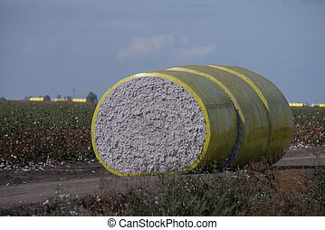 Close up cotton roll on field