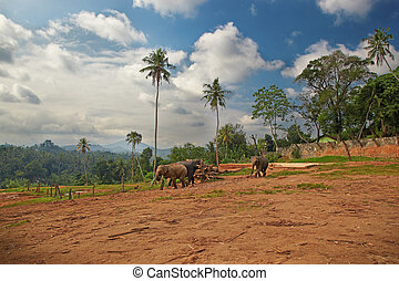 Outskirts of the indian village - A small group of elephants...