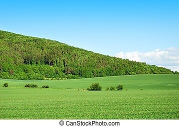 Green forest hill with green field and blue sky