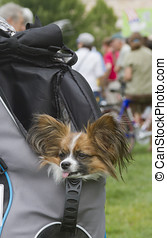 Pup Hitching a Ride in a Backpack - Asheville, North...