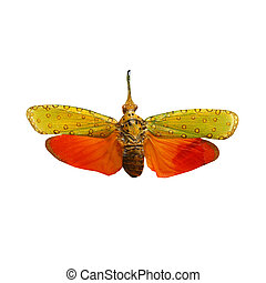 colorful cicada isolated on white background