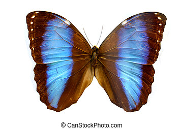 colorido, mariposa, aislado, en, blanco,