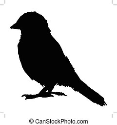 sparrow - black silhouette of sparrow