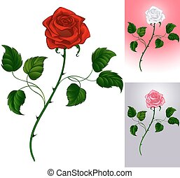red rose on white - Three options artistically painted...