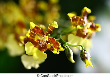 close up orchid in garden, colorful flower - close up vivid...