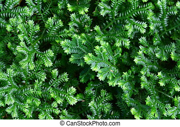 close up fern and moss in forest