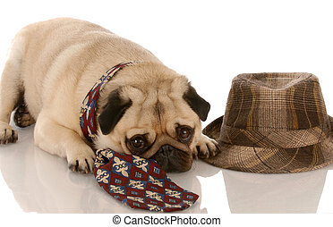 pug wearing mens tie laying beside fedora