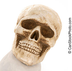skull skeleton with reflection isolated on white background
