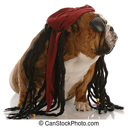 english bulldog dressed up as a pirate