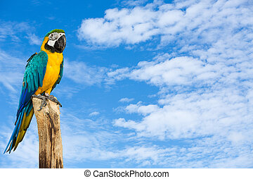 Macaw bird with blue sky background