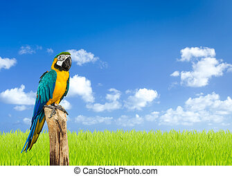 Macaw bird with green grass fields and blue sky background