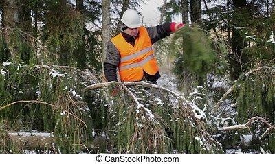 Lumberjack working with ax in forest near spruce