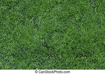 Sports grass texure - golf, tennis football grass texure...