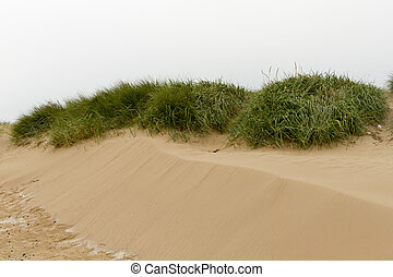 sand dune landscape on the coast Europe