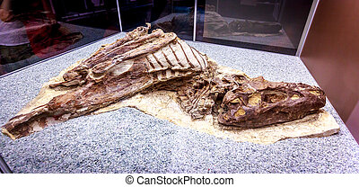 Fossil Exhibit in Royal Tyrrell Museum - Drumheller, AB...