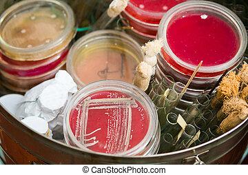 prueba, tubos,  Petri, Platos