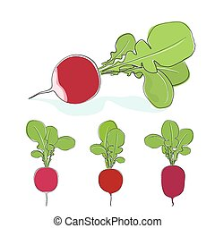 Radish vegetable with leaves on a white background - Radish,...
