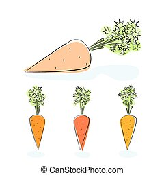 Carrot root vegetable on a white background - Carrot, three...