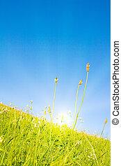 Idyllic lawn with sunlight