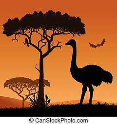 Ostrich - Savannah, the silhouette of the trees and the...