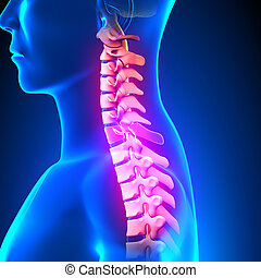 C7 Disc - Cervical Spine