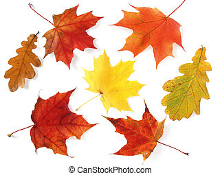 autumnal palette - bright colors of dry autumnal leaves...