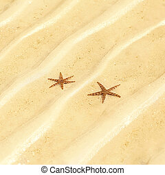 Starfish on the beach in the sand