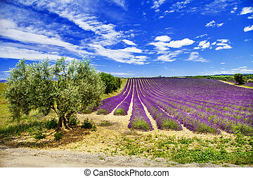 Provence with blooming lavande - scenic landscapes of...