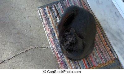 black cat resting