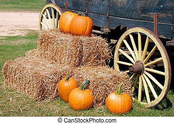 pumpkins for sale rural georgia