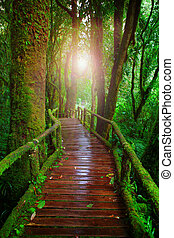 wood ways in mountain rain forest Doi Inthanont National...