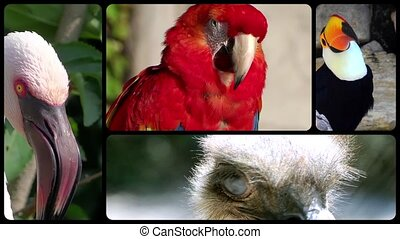 Birds, montage - Different species of birds collage