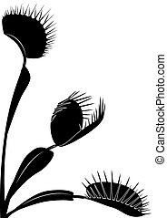 Venus flytrap - vector illustration of Venus flytrap in...