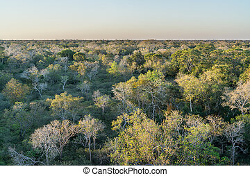 Brazilian pantanal forest at sunset - Wide view of Brazilian...