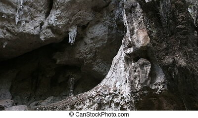 cliff with growing trees and caves