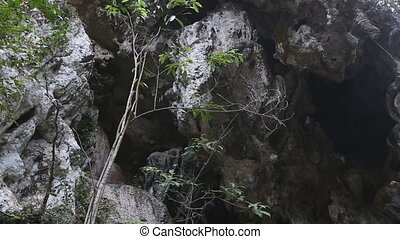 cliff with growing trees and caves - dark cliff with growing...