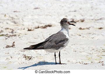 Sea Gull - A sea gull landing on the beach.