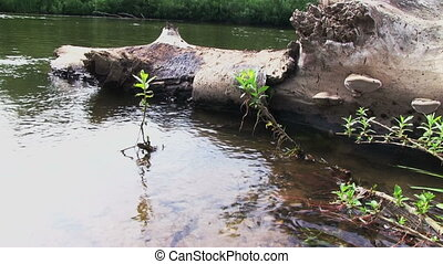 Summer River - Summer river  with old snag on foreground