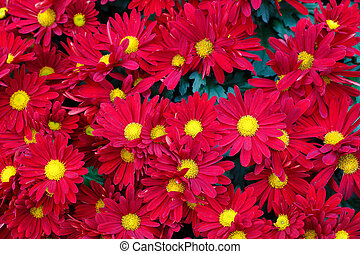 red and yellow flowers with pollen