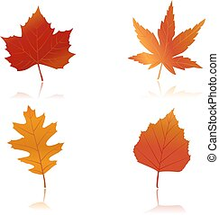 Vibrantly colored autumn leaves - illustration of maple, oak...