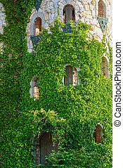 Castle Tower - Ivy-Covered Castle Tower