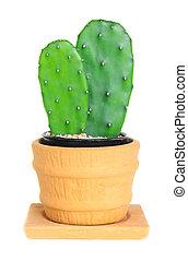 Cactus ( Opuntia ) on isolated background ( Cereus hexagonus...