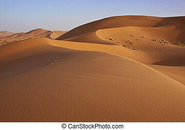 sand dunes in the Sahara desert - sand dunes with cloudless...