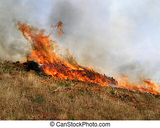 Wild bush vegetation in fire - Wild bush vegetation in fire...