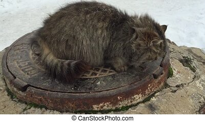 Cat sitting on a manhole cover in winter.
