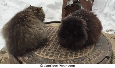 Two cats sitting on a manhole cover in winter.