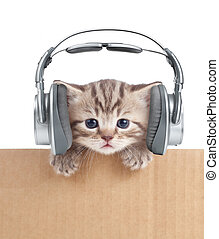 Funny kitten cat in headphones in cardboard box isolated on...