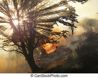Disaster fire in the forest