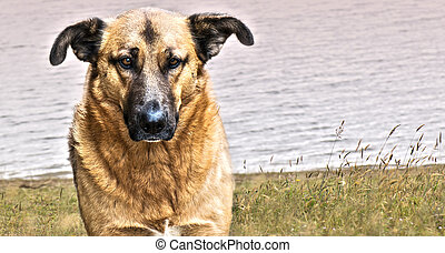 Domestic dog - Nice domestic dog looking at the camera with...